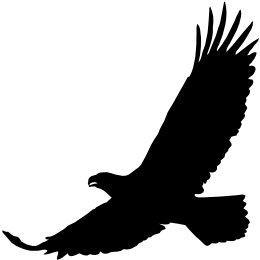 kphmph-red_tailed_hawk-id