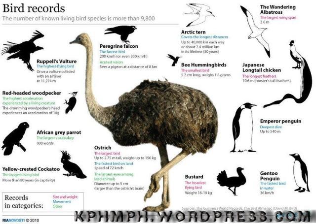 kphmph.wordpress.com-burung tercepat d dunia